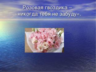 Розовая гвоздика – «никогда тебя не забуду».