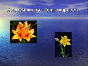 Жёлтая лилия – благодарность.
