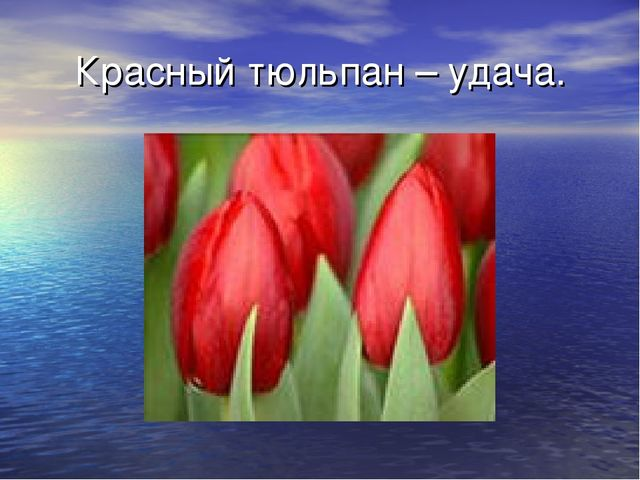 Красный тюльпан – удача.