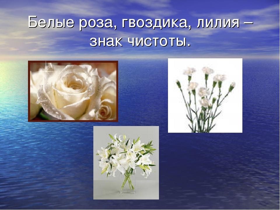 Белые роза, гвоздика, лилия – знак чистоты.