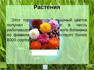 В России в ночь на 22 июня отмечали праздник Ивана Купалы. Юноши и девушки ис