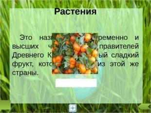 А в России, как, впрочем, и во многих других странах, цветком солнца, «солнеч