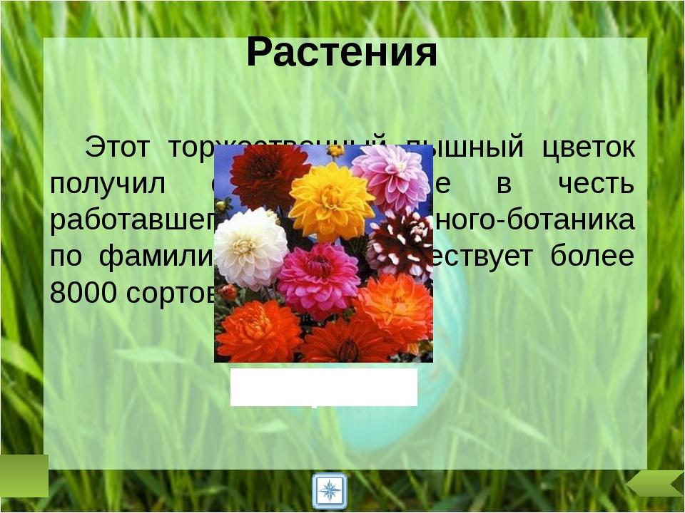 В России в ночь на 22 июня отмечали праздник Ивана Купалы. Юноши и девушки ис...
