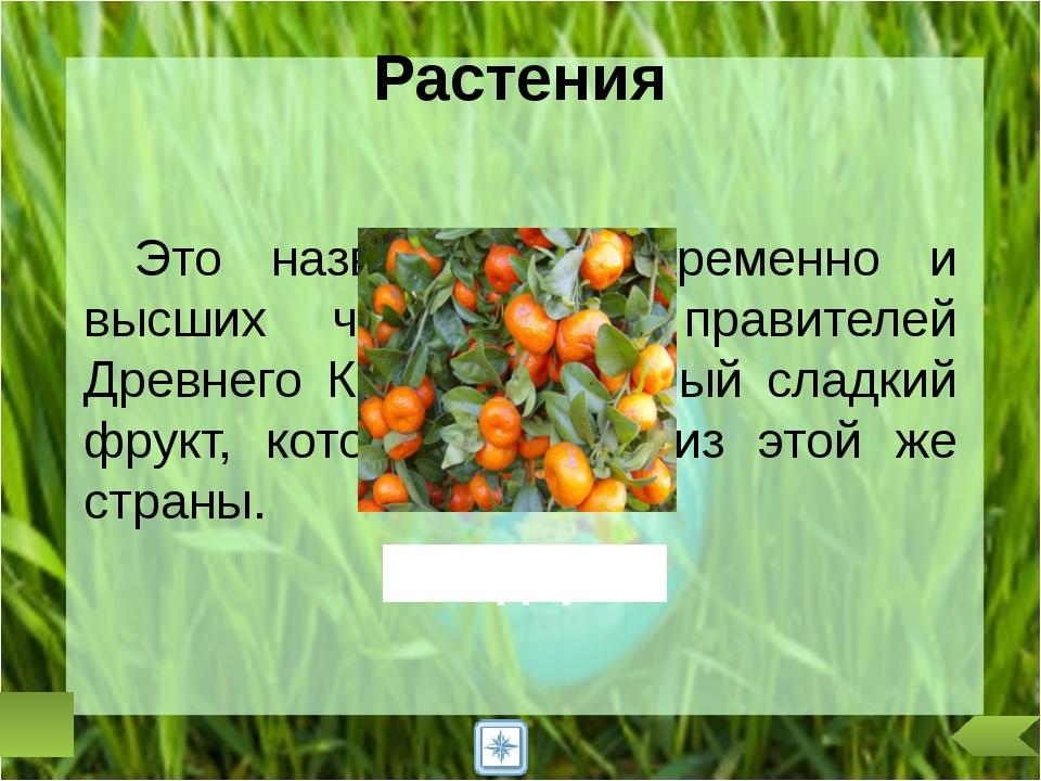 А в России, как, впрочем, и во многих других странах, цветком солнца, «солнеч...