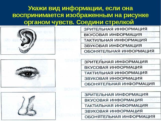 Укажи вид информации, если она воспринимается изображенным на рисунке органом...