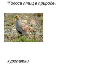 "куропатки ""Голоса птиц в природе""."