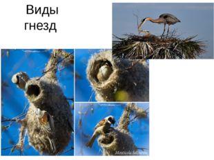 Виды гнезд
