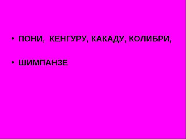 ПОНИ, КЕНГУРУ, КАКАДУ, КОЛИБРИ, ШИМПАНЗЕ