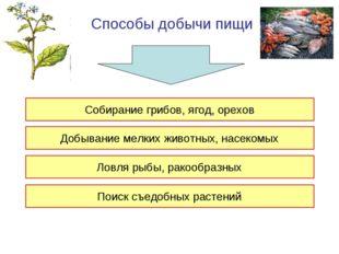 Способы добычи пищи Собирание грибов, ягод, орехов Добывание мелких животных,