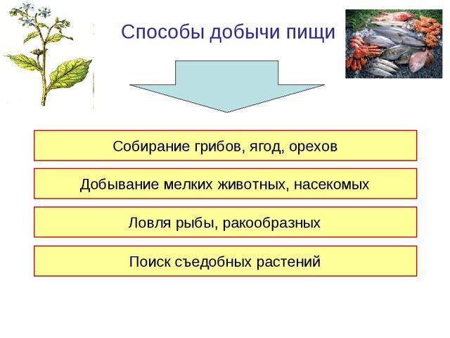 Способы добычи пищи Собирание грибов, ягод, орехов Добывание мелких животных,...
