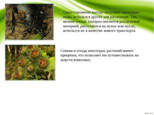 Одностороннюю выгоду получают некоторые виды, используя других для расселения