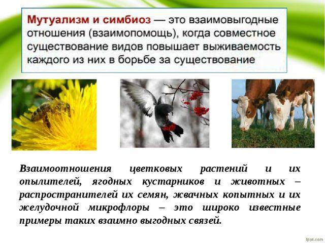 Взаимоотношения цветковых растений и их опылителей, ягодных кустарников и жив...