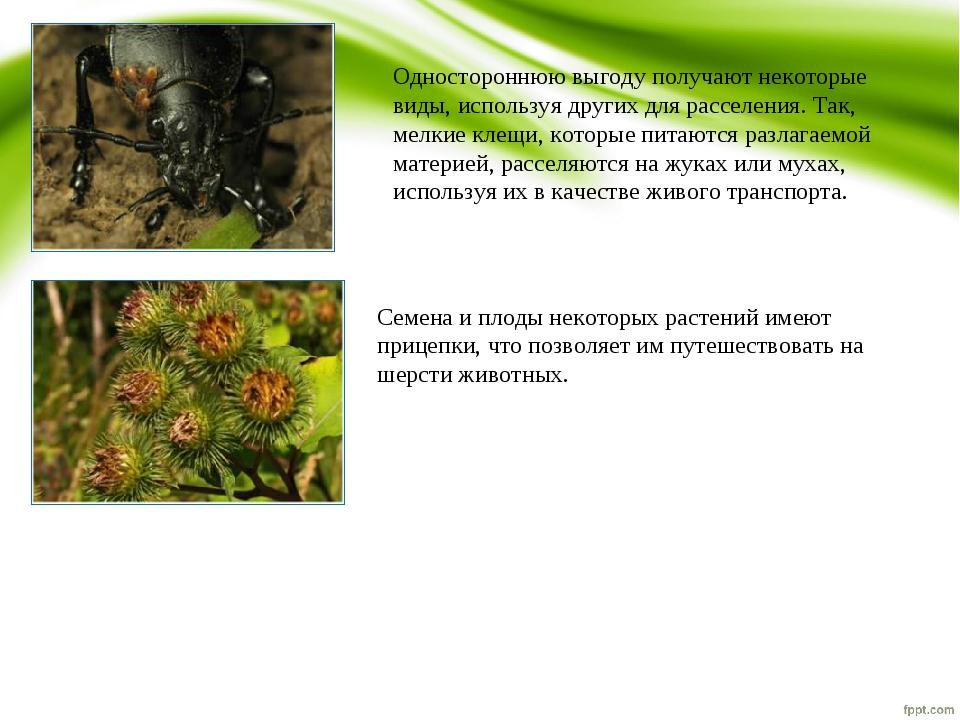 Одностороннюю выгоду получают некоторые виды, используя других для расселения...