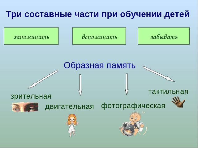 запоминать вспоминать забывать Три составные части при обучении детей Образна...