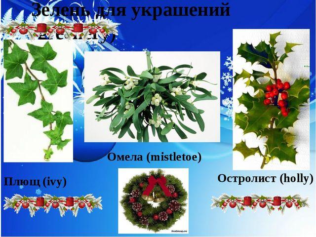Зелень для украшений (greenery) Плющ (ivy) Омела (mistletoe) Остролист (holly)