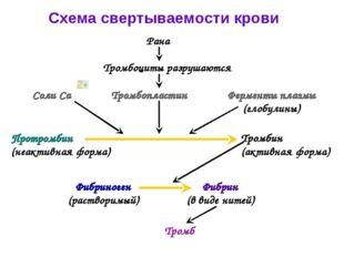 Схема свертываемости крови Рана Тромбоциты разрушаются Тромбопластин Соли Са