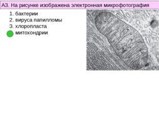 А3. На рисунке изображена электронная микрофотография бактерии вируса папилло