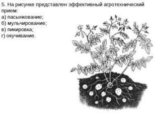 5. На рисунке представлен эффективный агротехнический прием: а) пасынкование;