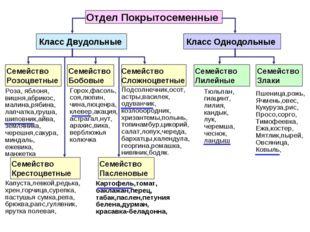 Отдел Покрытосеменные Класс Двудольные Класс Однодольные Семейство Розоцветны
