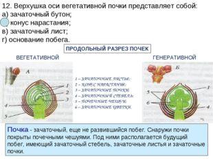 12. Верхушка оси вегетативной почки представляет собой: а) зачаточный бутон;