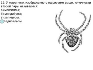 15. У животного, изображенного на рисунке выше, конечности второй пары называ
