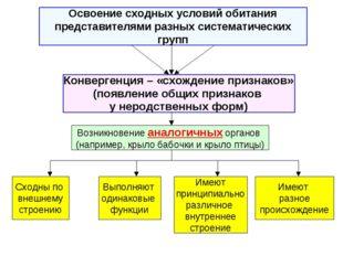 Освоение сходных условий обитания представителями разных систематических груп