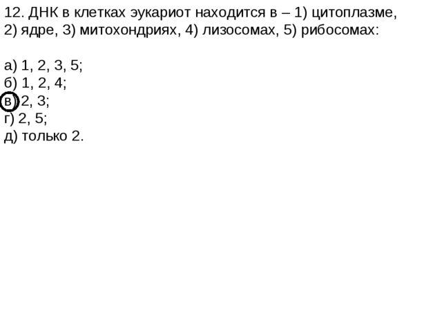 12. ДНК в клетках эукариот находится в – 1) цитоплазме, 2) ядре, 3) митохондр...