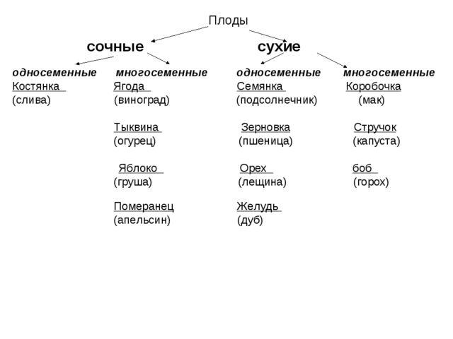 Плоды  сочные сухие односеменные многосеменные односеменные многосеменные К...