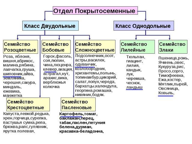 Отдел Покрытосеменные Класс Двудольные Класс Однодольные Семейство Розоцветны...