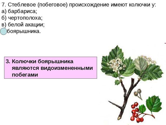 7. Стеблевое (побеговое) происхождение имеют колючки у: а) барбариса; б) черт...