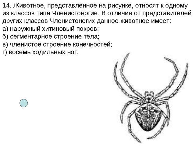 14. Животное, представленное на рисунке, относят к одному из классов типа Чле...