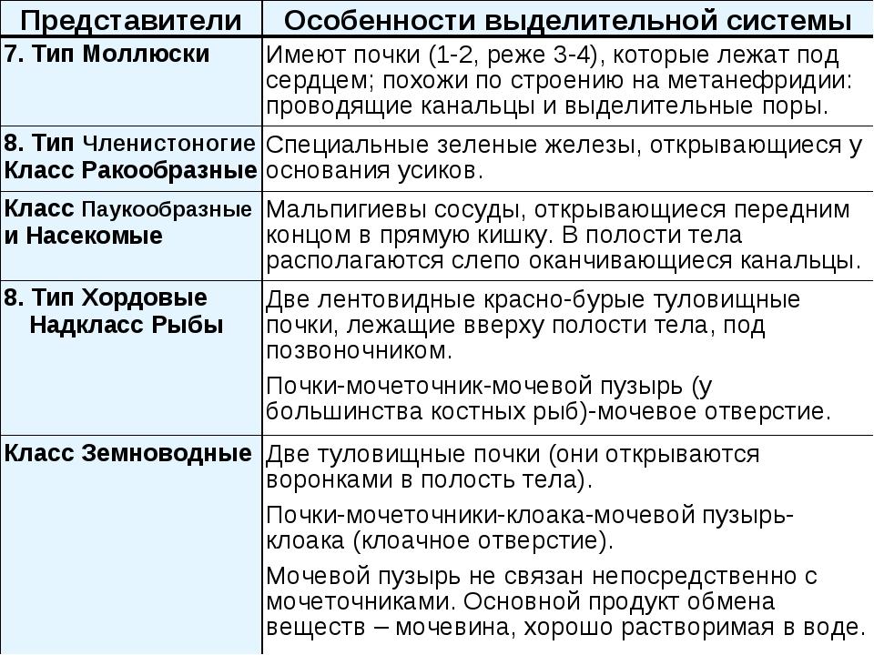ПредставителиОсобенности выделительной системы 7. Тип МоллюскиИмеют почки (...