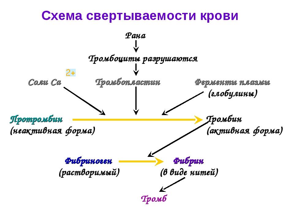 Схема свертываемости крови Рана Тромбоциты разрушаются Тромбопластин Соли Са...