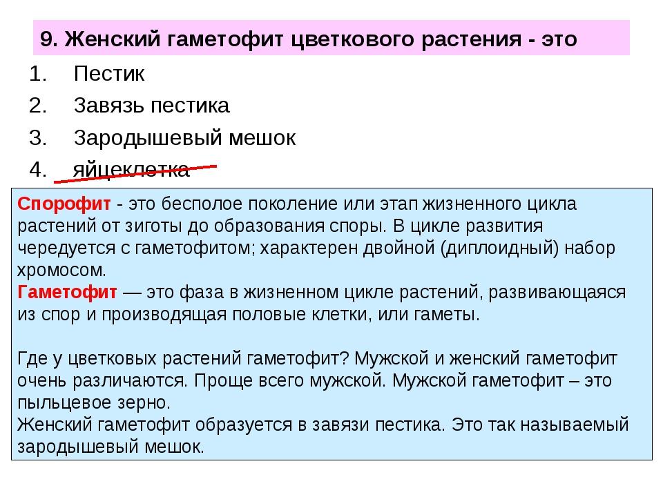 9. Женский гаметофит цветкового растения - это Пестик Завязь пестика Зародыше...