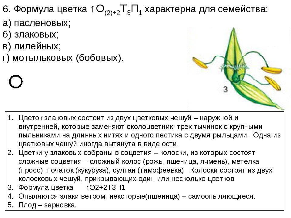 6. Формула цветка ↑О(2)+2Т3П1 характерна для семейства: а) пасленовых; б) зла...