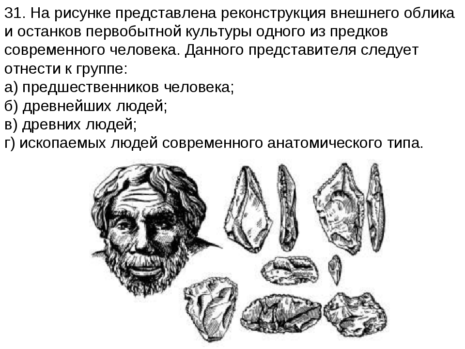 31. На рисунке представлена реконструкция внешнего облика и останков первобыт...