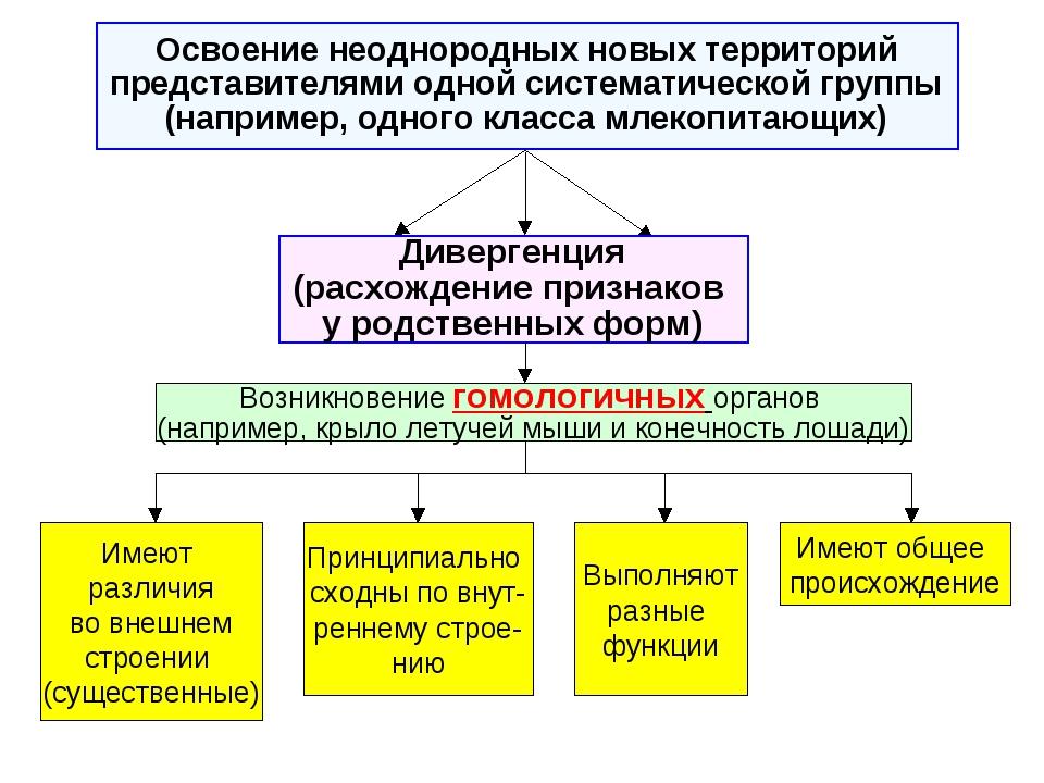 Дивергенция (расхождение признаков у родственных форм) Возникновение гомологи...