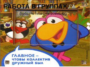 РАБОТА В ГРУППАХ (собрать лепестки ромашки)