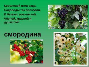 Королевой ягод сада, Садоводы так прозвали, И бывает золотистой, Чёрной, кра