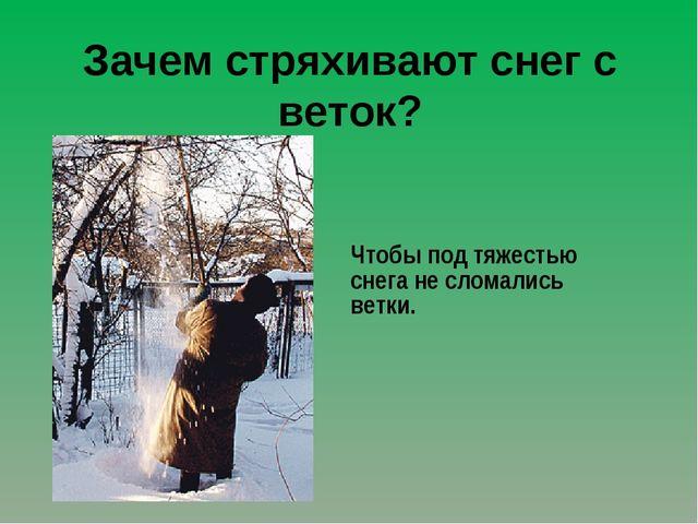 Зачем стряхивают снег с веток? Чтобы под тяжестью снега не сломались ветки.