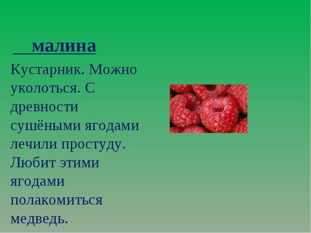 малина Кустарник. Можно уколоться. С древности сушёными ягодами лечили прост...