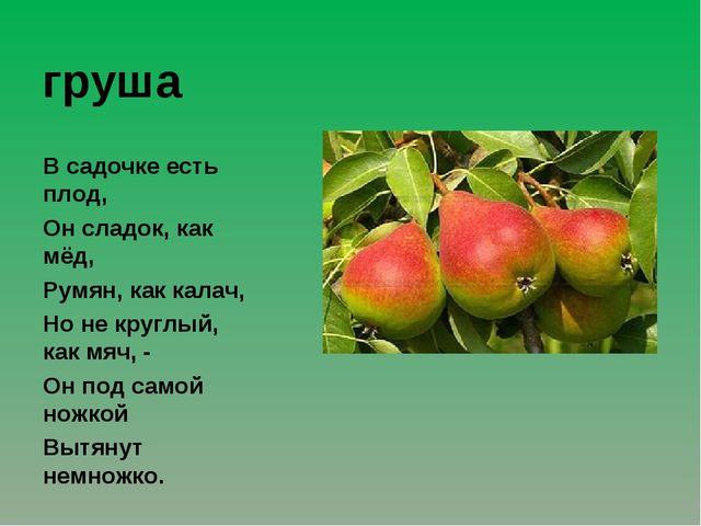 груша В садочке есть плод, Он сладок, как мёд, Румян, как калач, Но не круглы...