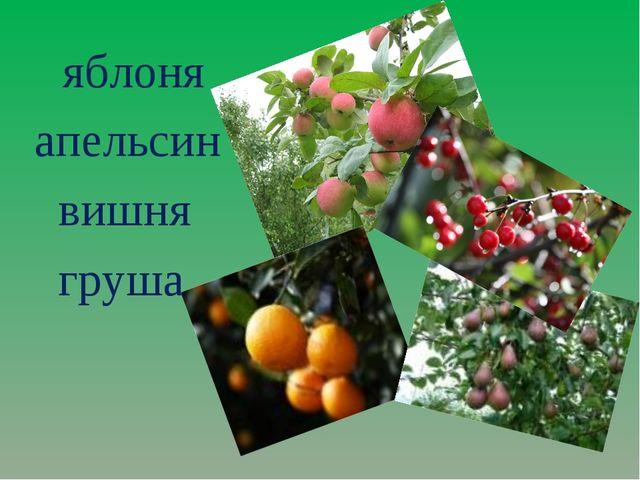 яблоня апельсин вишня груша