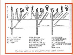Согласно эволюционной теории человек произошел от обезьяны. Место человека в