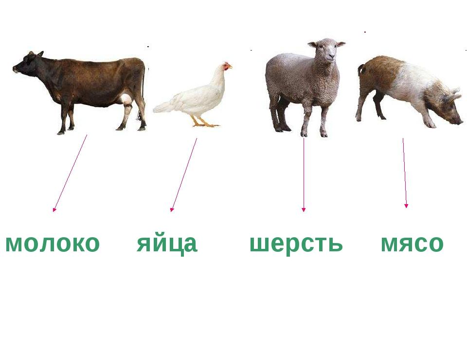 молоко яйца шерсть мясо
