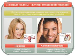 Половые железы – железы смешанной секреции Яичники Семенники (яички) Определ
