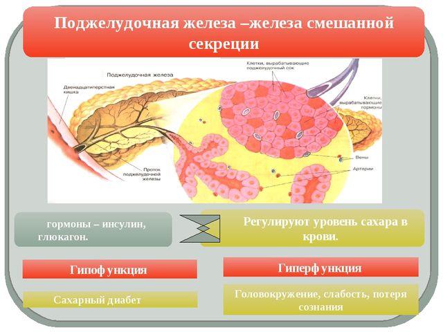 Поджелудочная железа –железа смешанной секреции Гипофункция Гиперфункция Рег...