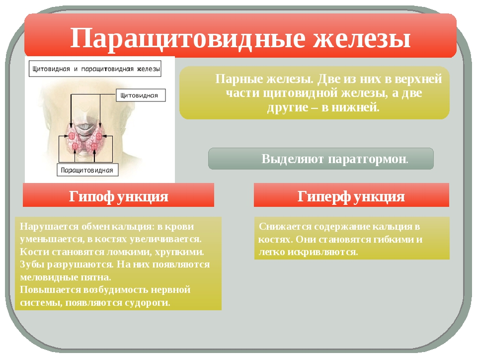 Паращитовидные железы Гипофункция Гиперфункция Нарушается обмен кальция: в к...