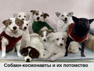 Пояснительная записка Собаки-космонавты и их потомство.