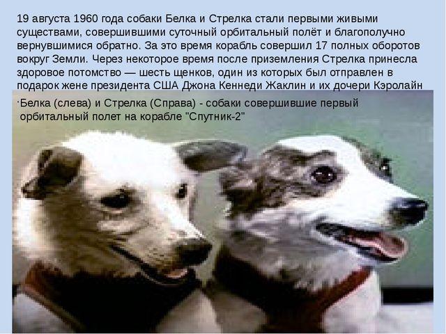 19 августа 1960 года собаки Белка и Стрелка стали первыми живыми существами,...